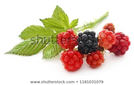 újonnan friss szeder fehér étel egészség Stock fotó © bdspn