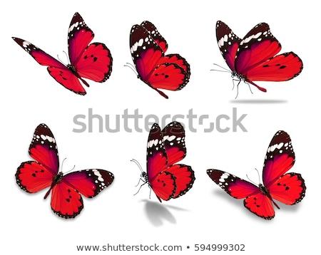 Czerwony Motyl żółty kwiat zwierząt Zdjęcia stock © jeancliclac