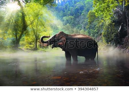 Слоны природы сцена иллюстрация воды ребенка Сток-фото © colematt