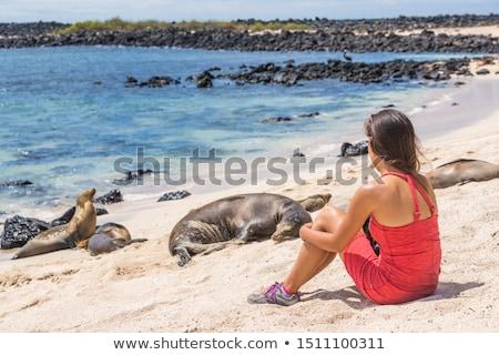 Galapagos tourist enjoying looking sitting by Galapagos Sea Lions Stock photo © Maridav