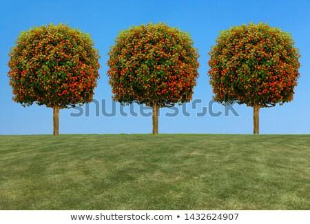 rohadt · zöld · alma · gyümölcs · levél · rajz - stock fotó © robuart