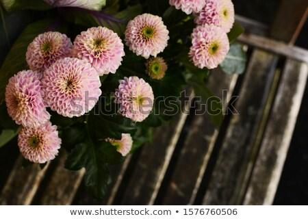 Bleek roze chrysant bloemen boven houten Stockfoto © sarahdoow