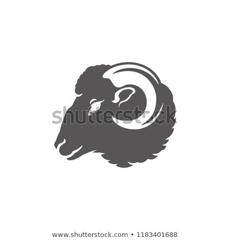 Bighorn Sheep Ram Head Front Icon Stock photo © patrimonio