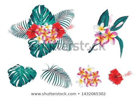 花 · 美 · 夏 · 旅行 · アフリカ - ストックフォト © gant