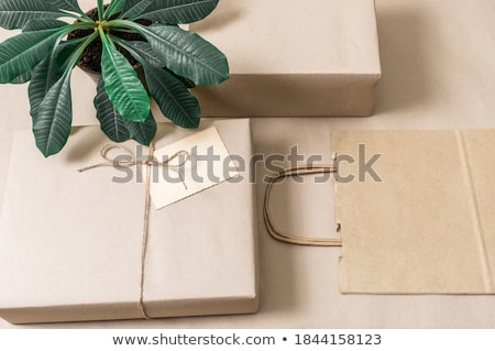 Donation Box and Green Plant Stock photo © devon