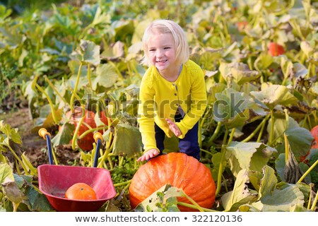 adorable baby girl having fun at the pumpkin patch stock photo © feverpitch