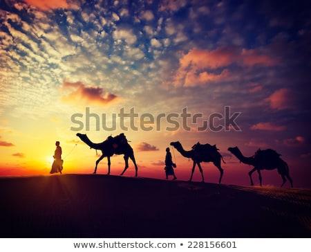 camels in desert - vintage retro style Stock photo © Mikko