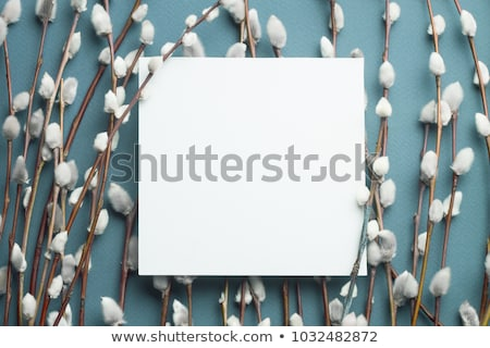 easter catkins willow blank paper stock photo © fotoaloja