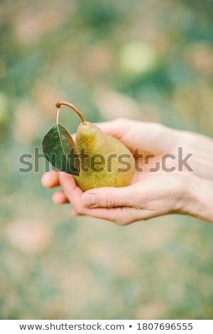 hand holding a green leaf  Stock photo © meinzahn