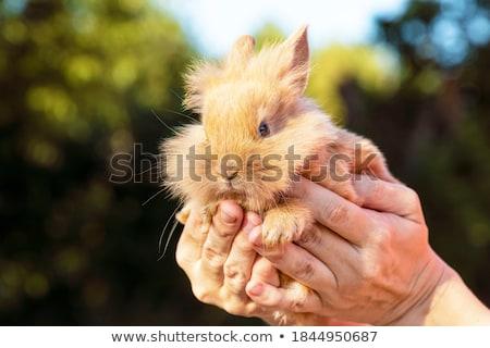 genç · tavşanlar · oturma · beyaz · tavşan · hayvan - stok fotoğraf © pruser