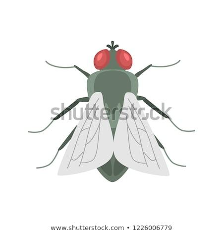 Voar inseto fruto figo diariamente luz Foto stock © deyangeorgiev
