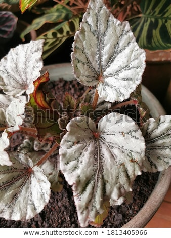 A houseplant in a pot Stock photo © bluering