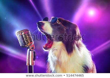 Бордер · колли · собака · камеры · трава · портрет · молодые - Сток-фото © simoneeman