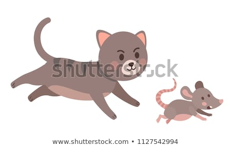 Gray kitten chasing mouse Stock photo © bluering