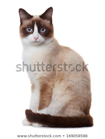 Gato retrato casa luz azul zapato Foto stock © Mikko