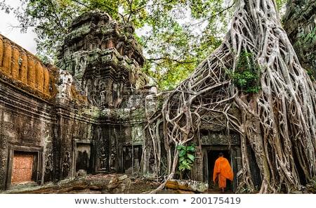 Tempel oude architectuur Cambodja boom natuur Stockfoto © tuulijumala