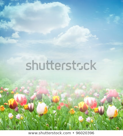 Spring background with pink tulip growing in garden Stock photo © Virgin