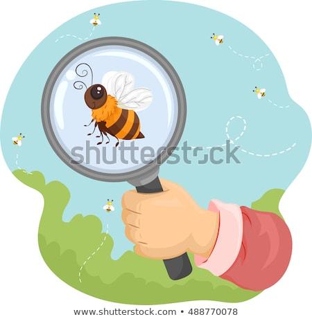 Abelha mão lupa animal ilustração abelha Foto stock © lenm