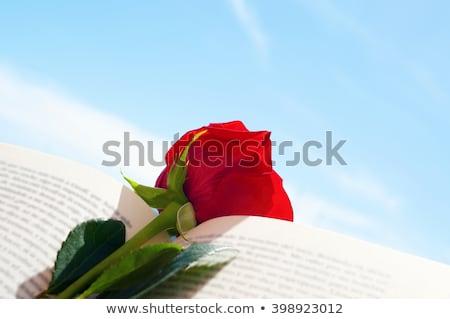 kitap · kırmızı · gül · bayrak · aziz · genç · gün - stok fotoğraf © nito