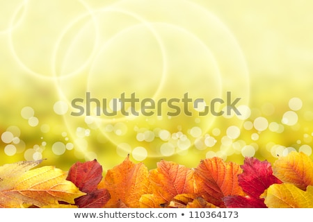 Autumn background with autumn maple red leaves and viburnum berries  Stock photo © Illia