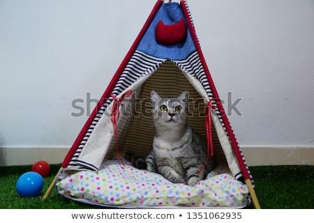 Fehér házimacska sátor házi alszik macska Stock fotó © Artspace