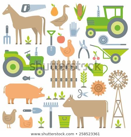 ストックフォト: 麦畑 · 人参 · アイコン · ニンジン · 植物