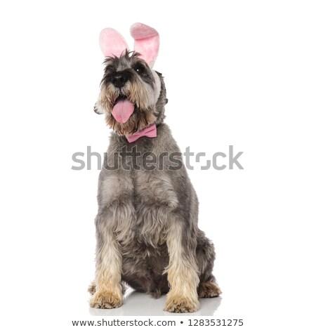 Singolare coniglio indossare rosa up Foto d'archivio © feedough