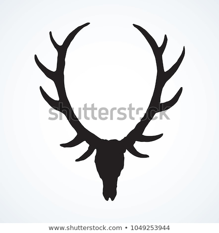 front view of roe deer skull Stock photo © taviphoto