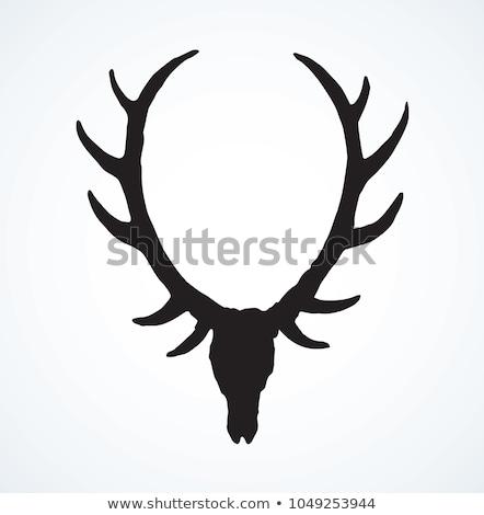 Fronte view cervo cranio isolato Foto d'archivio © taviphoto