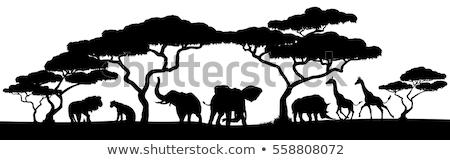 Scena animali selvatici savana illustrazione cielo albero Foto d'archivio © colematt