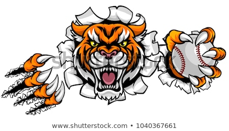 tiger holding baseball ball breaking background stock photo © krisdog