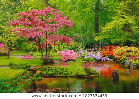 Japonais jardin parc Pays-Bas peu pluie Photo stock © dmitry_rukhlenko