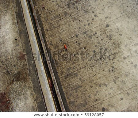 view of wet metal tramway in city with autumn leaves stock photo © Melvin07