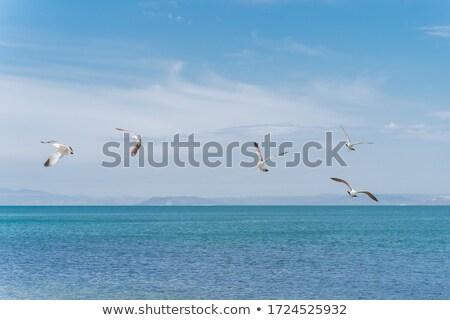 gabbiano · costa · mar · baltico · natura · uccelli · ali - foto d'archivio © njaj