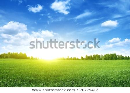 Pôr do sol grama verde campo colorido primavera natureza Foto stock © photocreo