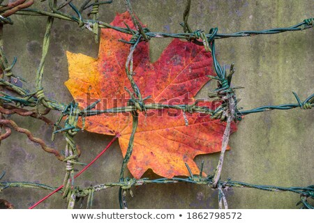 abstract leaf and barb Stock photo © sweetcrisis
