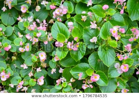 bloemen · foto · paar · liefde · meisje · man - stockfoto © dolgachov