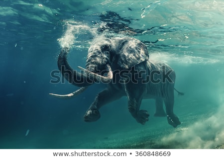 Stock photo: elephant and sea