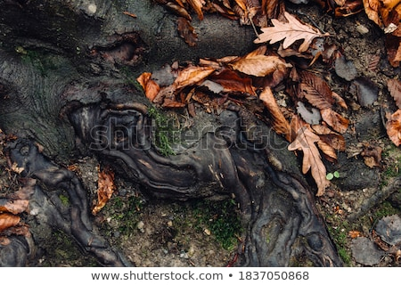 Stock photo: forest floor detail in autumn