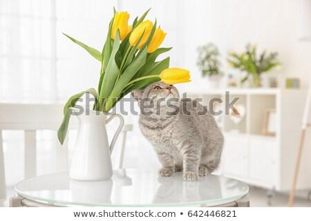 Cat and Tulip Stock photo © nailiaschwarz
