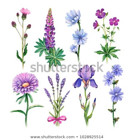 Paars bloemen landschap schoonheid groene Blauw Stockfoto © kawing921