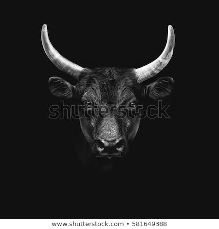 noir · vache · permanent · ferme · domaine - photo stock © pressmaster