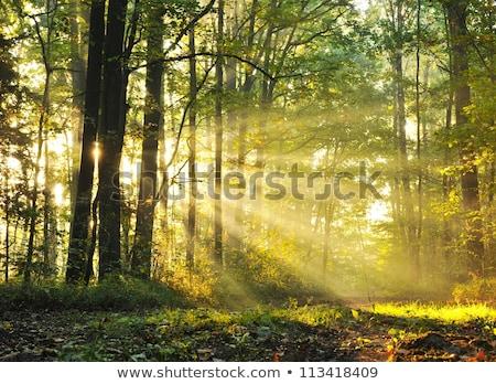 Zdjęcia stock: Lasu · wygaśnięcia · drzewo · wiosną · projektu