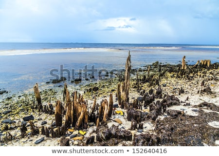 奇妙な 古い 木 海岸 空 ストックフォト © meinzahn
