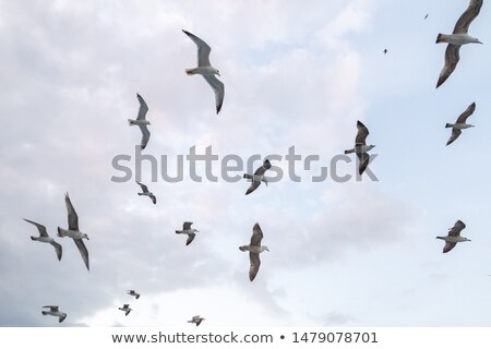 flock of seagulls at the beach stock photo © meinzahn