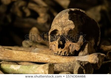Catacombs Skull Stock photo © searagen