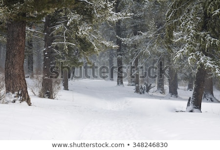 country road in forest at winter stock photo © mikko