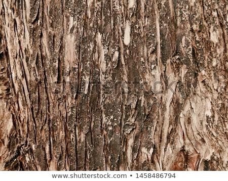 Cyprys kory drewna Zdjęcia stock © LianeM