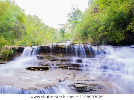 Forêt écouter végétation courir roches eau Photo stock © pixachi