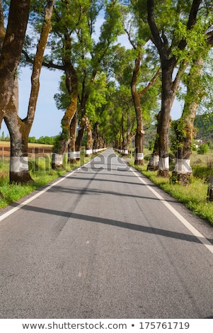 Photo stock: Route · vert · arbres · printemps · temps · Portugal